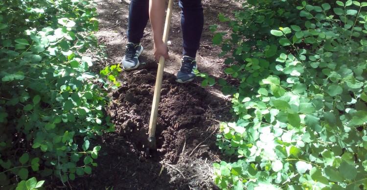 Ученици засадиха 9 дръвчета